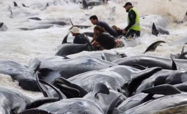 145 pilot balina karaya vurdu