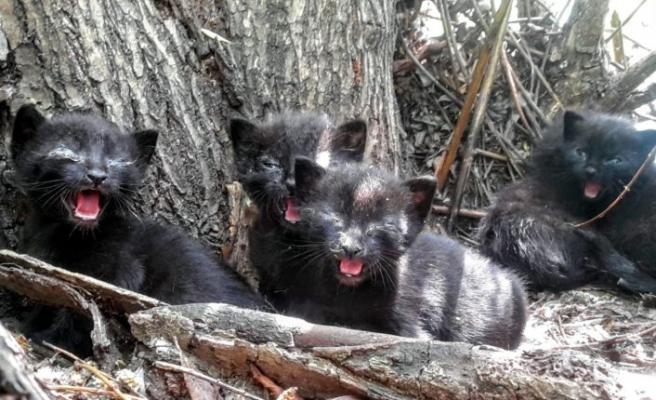 Bursa'da 6 yavru kedi 6 metre yüksekte mahsur kaldı