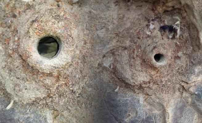 Kaya kartalının yuvası hayran bıraktı