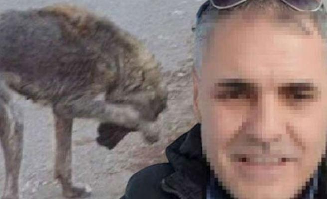 Bursa'da sokak hayvanlarını öldüreceğini söyleyen belediye çalışanı gözaltında!