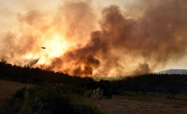 Milas'taki orman yangınında 'sabotaj' şüphesi