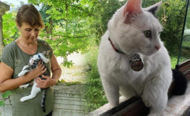 Bahçedeki kediyi silahla vurarak öldürdüler