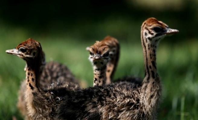 Bursa Hayvanat Bahçesi'nde yavru sevinci