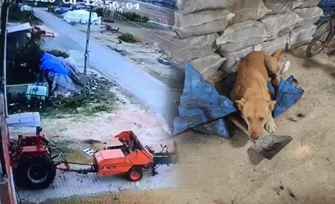 Sokak köpeğini öldüren şüpheli yakaalandı