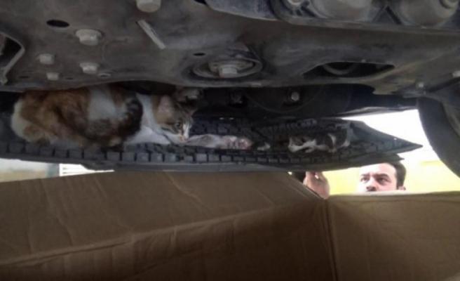 Aracının motorunda yavrulayan kedi için seferber oldu