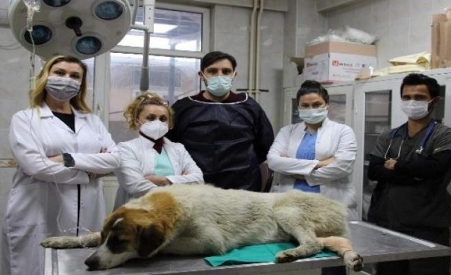 Bursa'da otomobilin çarptığı köpeği hayata döndürdüler