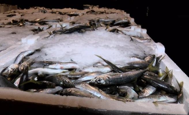 Balık sezonu kapandı! Sezonun son balıkları halde