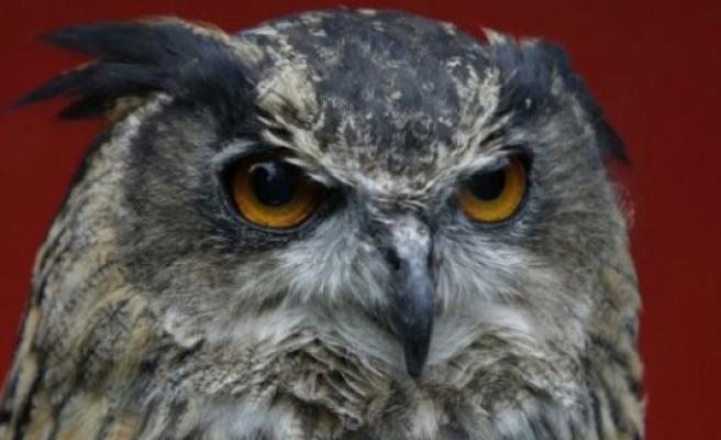 50 kişiyi yaralayan baykuşa ömür boyu hapis