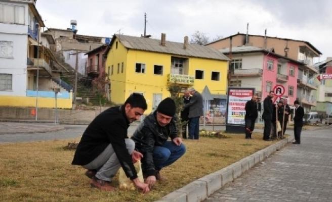 Afşin'de 15 Bin Lale, Nergis Ve Sümbül Soğanı Ekiliyor