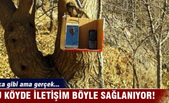 Ağaca asılan kutudan iletişim!