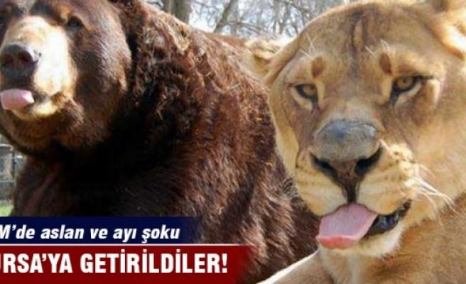 AVM'de aslan ve ayı şoku!