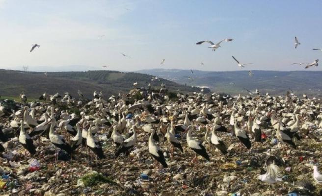 Baharın habercisi leylekler Bursa'ya gelmeye başladı