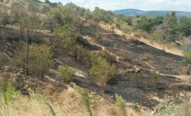 Balıkesir'de zeytinlik yangını