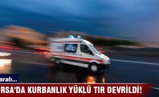 Bursa'da kurbanlık yüklü TIR devrildi!