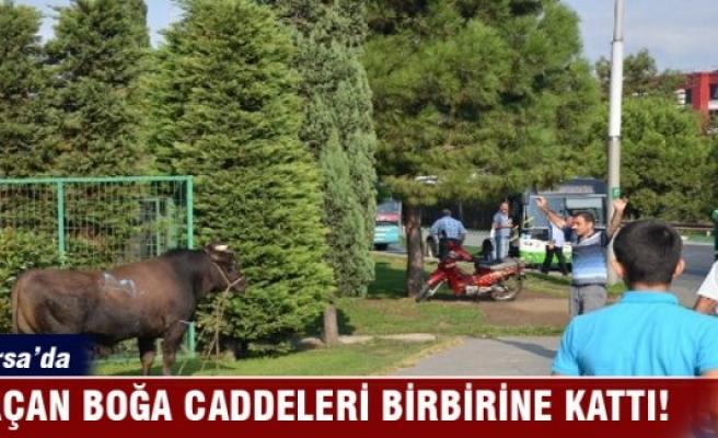 Bursa'da kaçan boğa caddeleri birbirine kattı