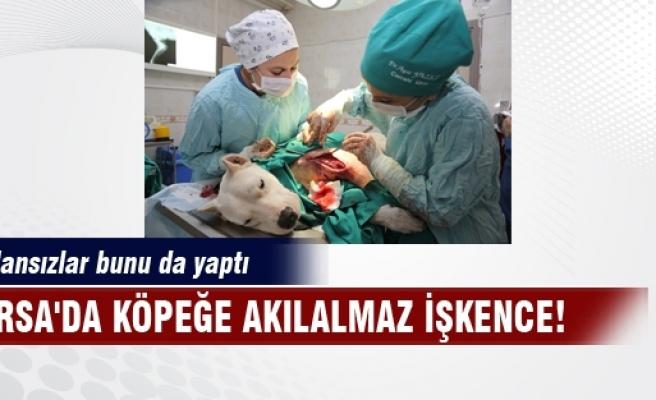 Bursa'da köpeğe akılalmaz işkence! Vicdansızlar bunu da yaptı!
