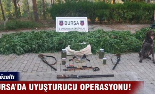 Bursa'da uyuşturucu operasyonu: 5 gözaltı