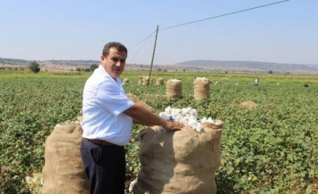 Çiftçiler, Pamuk İçin Umutlu