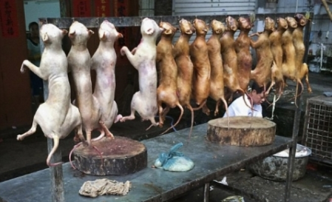 Çin'de büyük vahşet! Köpek yeme festivali