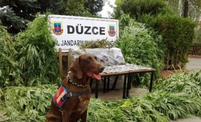 Düzce'de Uyuşturucu Madde Ele Geçirildi