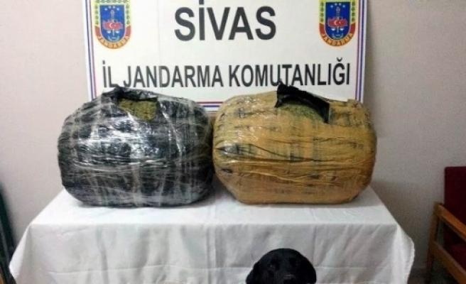 Gürün'de 35 Kilo Esrar Ele Geçirildi