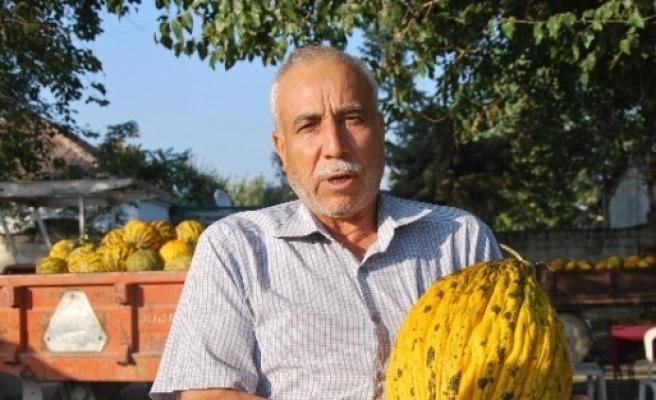 Koçarlılı Kavuncular Çengel Tatarı'na Geri Dönüyor