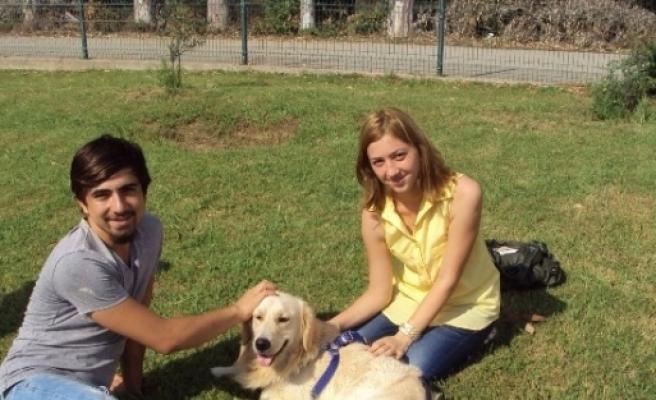 Konyaaltı'nda 52 Sokak Hayvanı Sıcak Yuvaya Kavuştu