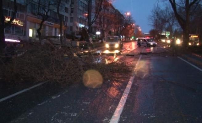 Lodos ağaçları devirdi!