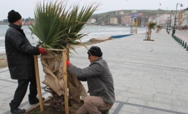 Marmaraereğlisi Belediyesi Palmiyeleri Soğuktan Koruyor