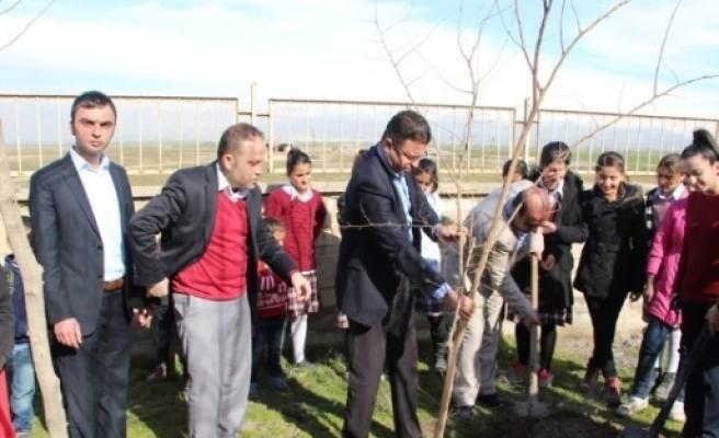 Silopi Köy Okulunda Fidan Dikme Şenliği
