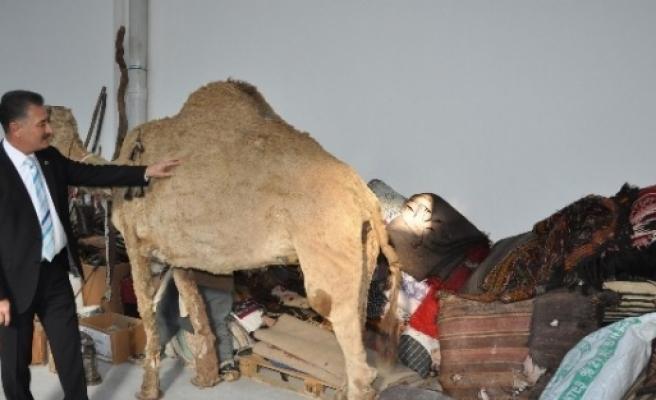 Toroslar'da Yörük-türkmen Müzesi Hayata Geçiyor