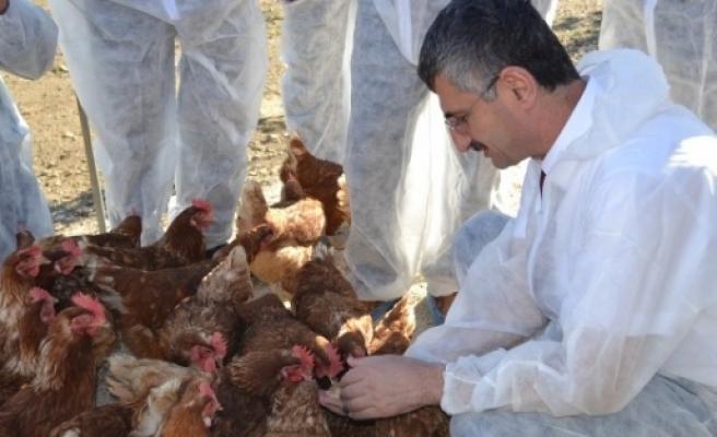Vali Bektaş Manisa'nın İlk Organik Yumurta Tesisini Gezdi