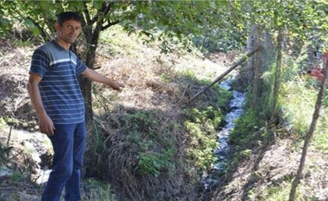 Bursa'da mahallenin kanalizasyonu ağaçları kuruttu!