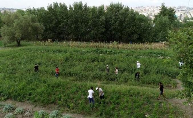 Bursa'da üniversiteli çiftçilerin organik ürünlerine özel ilgi