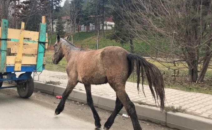 Pes artık! Atın zorlu yolculuğu