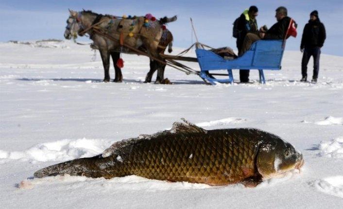 20 yıldır Eskimo usulü yapıyor! En büyüğünü yakaladı