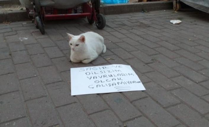 Bursa'da dilenci kedi ilgi çekti