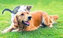 Evcil hayvanlarda ilk kez Covid-19 görüldü!