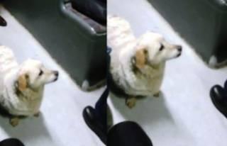 Bursa bu köpeği  konuşuyor
