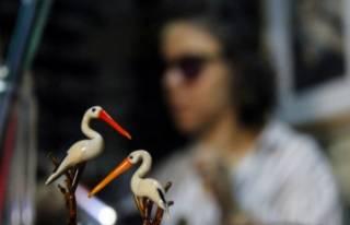 Bursa'da hayvanlar alemine camla hayat veriyor