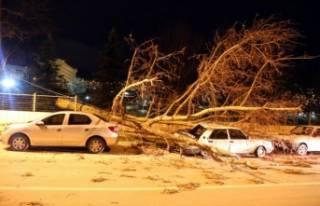 Bursa'da kuvvetli fırtına hayatı felç etti