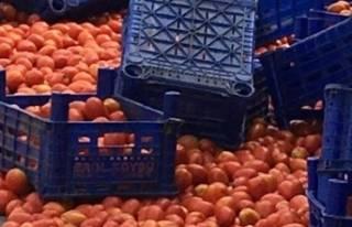 """""""Çöp konteynerlerine dökülen domates görüntüleri""""..."""