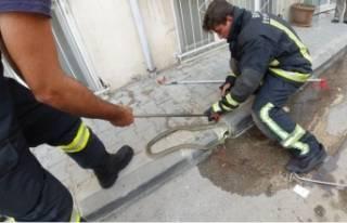 Bursa'da nefes kesen yılan operasyonu