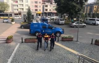 Bursa'da jandarma hırsızı gizlendiği ağaç...
