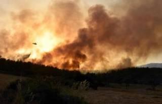Milas'taki orman yangınında 'sabotaj'...