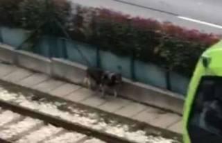Bursa'da raylara giren davetsiz misafir tren seferlerinin...