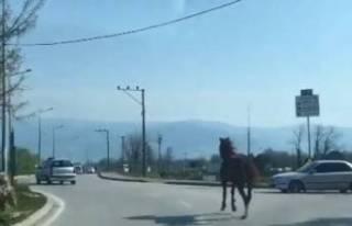 Bursa trafiğinde dört nala koştu