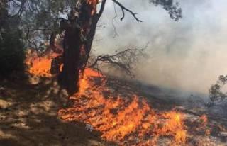 Nitelikli doğal koruma alanı Lara ormanında yangın