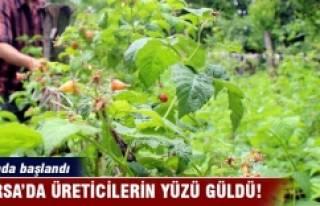 Bursa'da ahududu yüz güldürdü