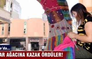 Bursa'da çınar ağacına kazak ördüler